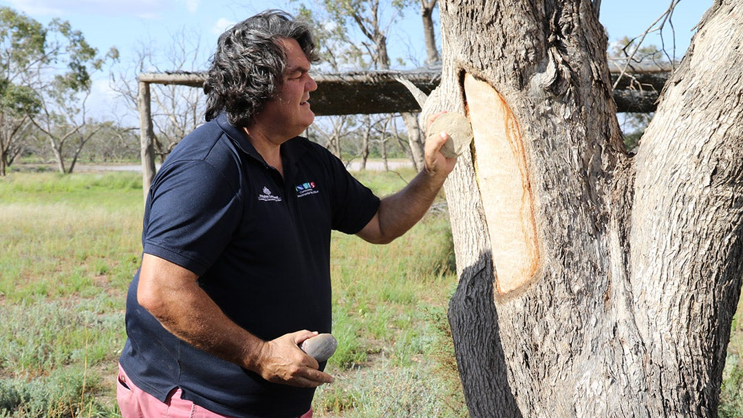 Learn more about scar trees. Watch Stuff Everyone Should Know About Australia on 10 play
